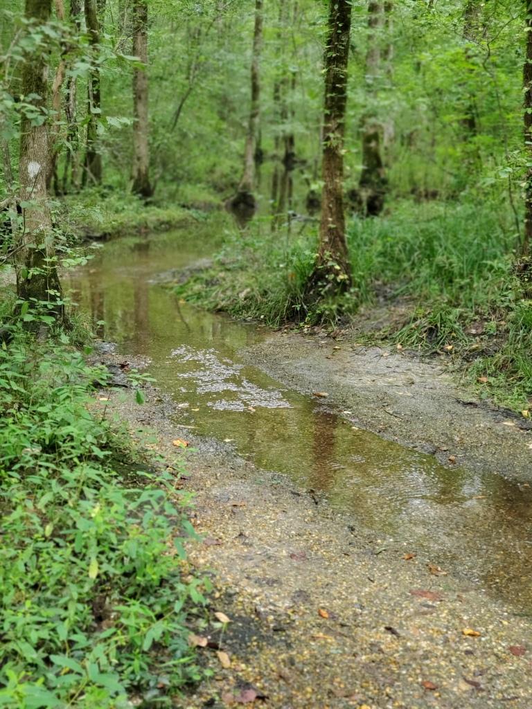 Kết quả hình ảnh cho God's Acre Healing Springs